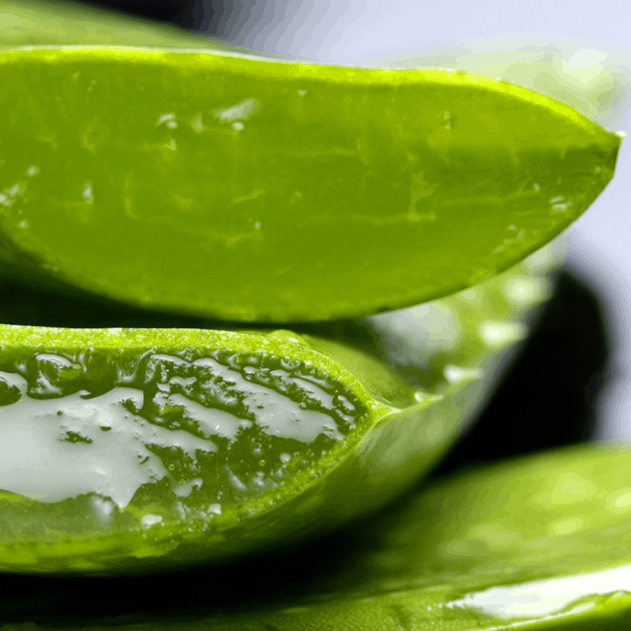Nahaufnahme eines aufgeschnittenen Aloe Vera-Blatts